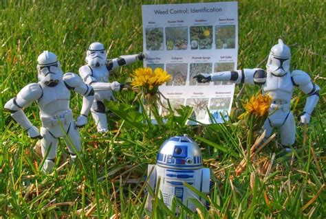 star wars homemade lawn 6 herbicides kill the weeds without killing the earth treehugger