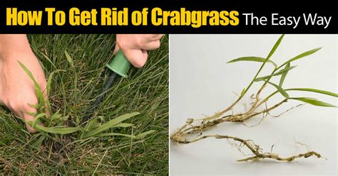 how to get rid of grass in flower beds how to get rid of crabgrass the easy way