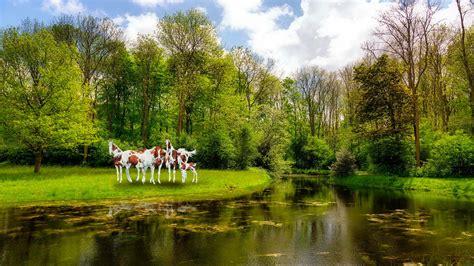 imagenes de bosques increibles fondo pantalla caballos en bosque
