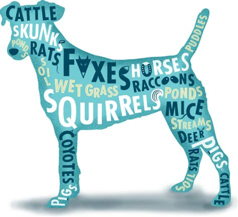 lepto for dogs magley animal hospital
