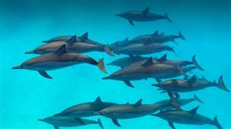 Pictures Of Pictures Of Dolphins Collection For Free