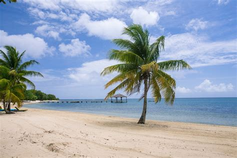 images tree ocean shore vacation lagoon island
