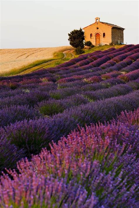best provence best 25 lavender fields ideas on lavender