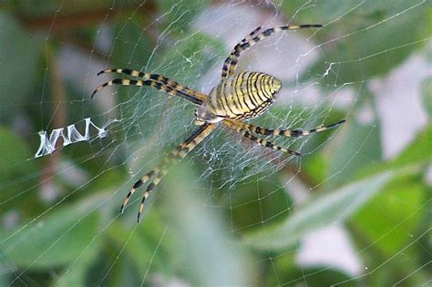 Garden Spider On Drugs Scientists Learned Anything From Giving Drugs To
