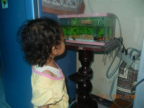 Pompa Akuarium Paling Kecil akuarium mini scientia taqqiya salsabila