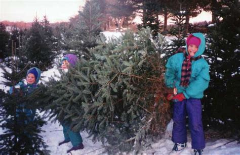 cut your own christmas tree albany ny hudson valley country delights