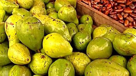 fruit 10 malaysia borneo fruits the avocado of kuching city