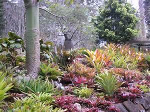 bromeliad garden tamborine mountain botanic gardens