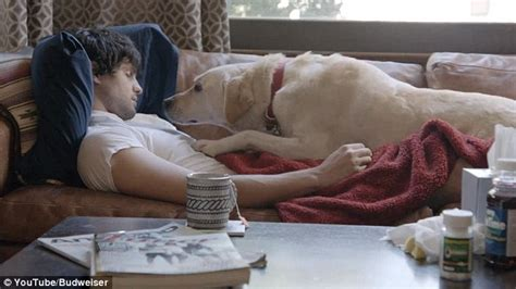 my dog licks the couch budweiser advert that aims to prevent drink driving