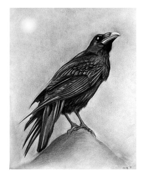 perched raven drawing clipartxtras