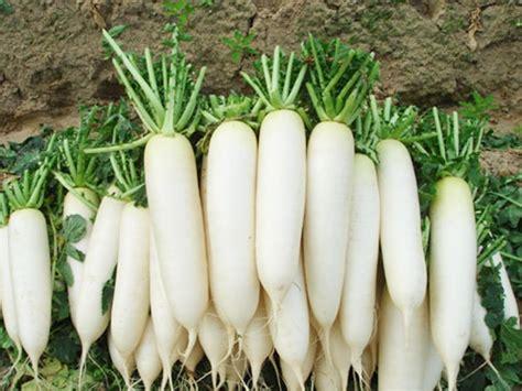 Ripped List White Rawis get cheap white crisp aliexpress alibaba