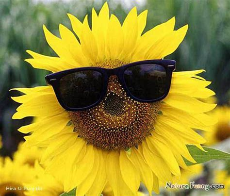 Flowe Funy 17 best images about futures so bright gotta wear shades