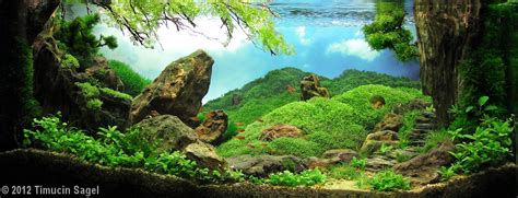 Aquascaping Rocks by Aquascape Rock Www Imgkid The Image Kid Has It