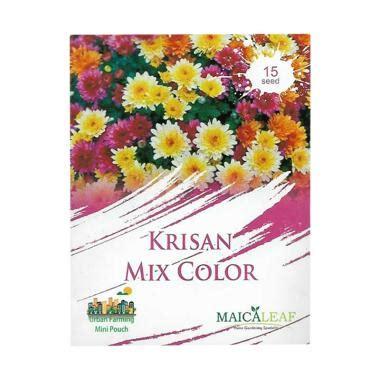 Tanaman Jadi Bunga Krisan Mix 1 jual bibit bunga krisan harga menarik blibli