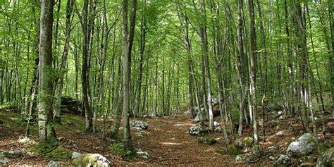 popolare di vicenza caldogno foresta bosco vicenza report notizie cronaca cultura