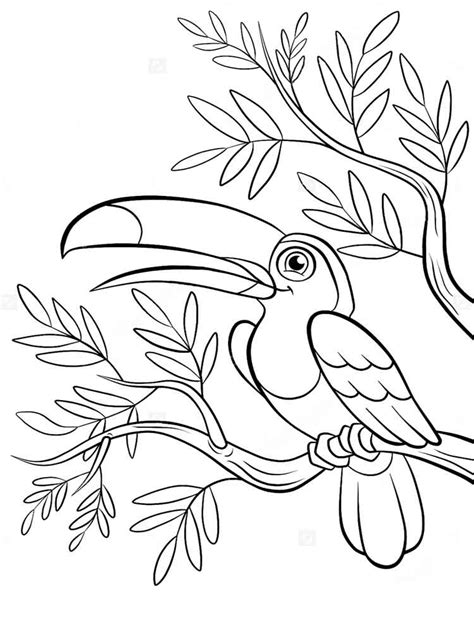 toucan coloring pages   print toucan coloring