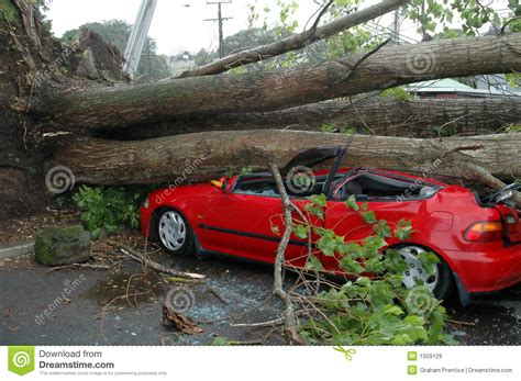 car with tree image car crushed by tree stock image image of wheel lines 1509129