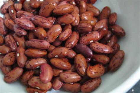 Kacang Jogo Merah satu harapan gembolo sumber karbohidrat dan diosgenin