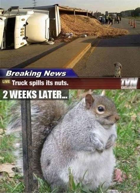 Funny Squirrel Memes - funny animal pics
