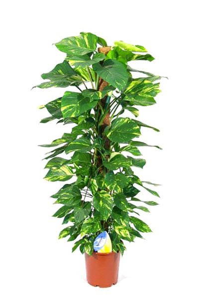 indoor plants plantscapes indoor plants dubai pots