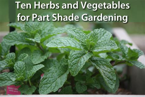 herbs  vegetables  grow  beautiful shade