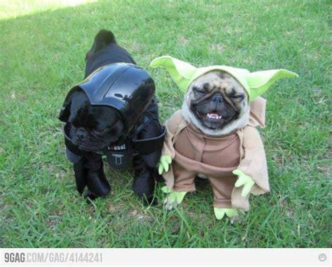 yoda pug costume best 25 yoda costume ideas on diy crochet yoda hat pugs and