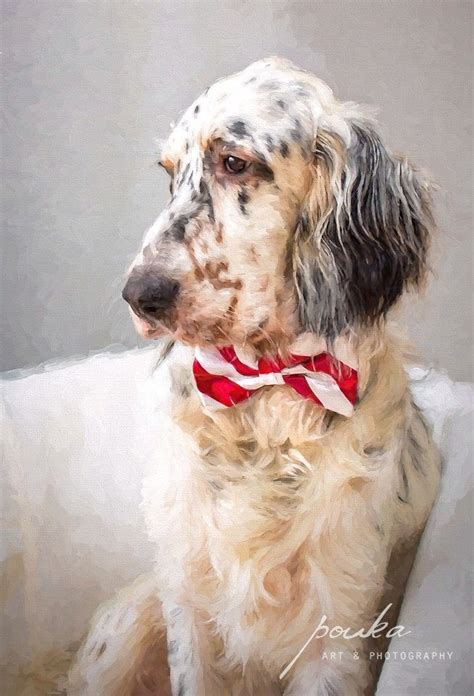 english setter dog food 113 best images about english setters on pinterest