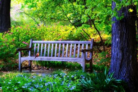 bench  nature background wallpapers