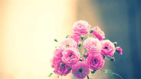 03580 Squishy Flower Squishy Bunga Selusin مجموعة من اجمل صور الزهور عالية الجودة hd صور زهور