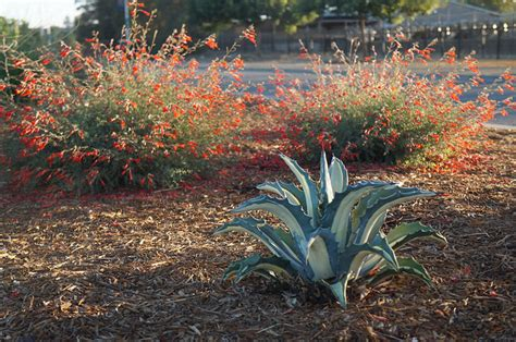 35 low water plants you ve probably never heard of uc