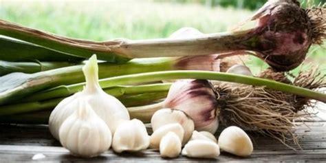 come piantare l aglio in vaso oltre 25 fantastiche idee su piantare aglio su