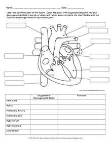 human body system labeling worksheets lesson plan