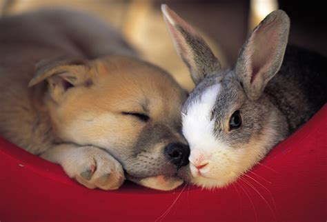 puppies and bunnies about cat and personalities