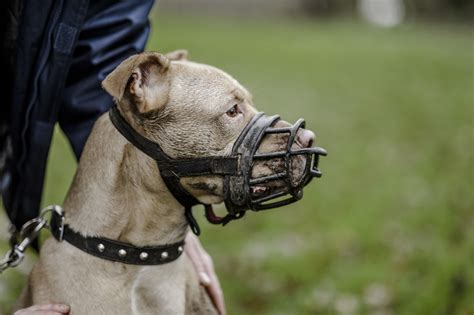 puppy muzzle dogs and muzzle how to muzzle your blue cross