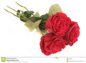 imagenes tres rosas tres rosas rojas hermosas fotos de archivo imagen 3392553