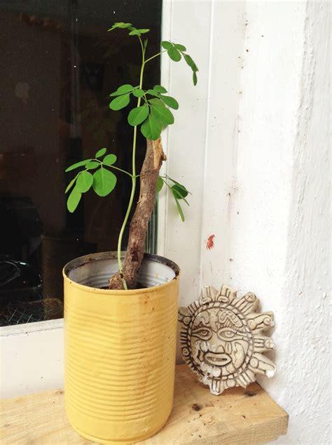 Plante D Intérieur Photo by Plante Pour Cuisine Fashion Designs