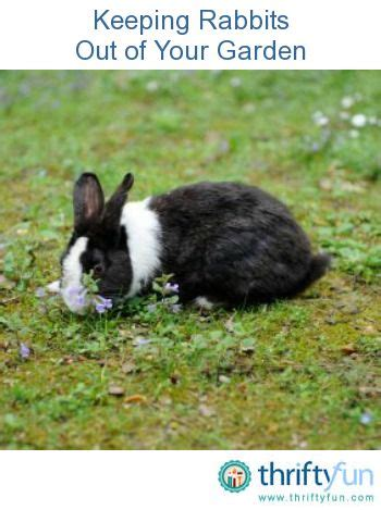 how to keep rabbits out of your backyard 1000 images about plagas y enfermedades en plantas on