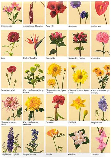 list of flowers with pictures beautiful flowers 30 flower pictures and names list