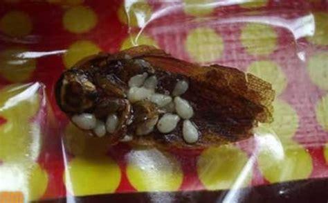 imagenes de cosas asquerosas las 10 cosas mas asquerosas encontradas en alimentos dogguie