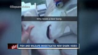 shark dragged to death behind boat fwc investigating second shark abuse video that shows beer