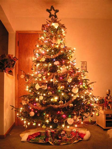 living stingy  war  christmas trees