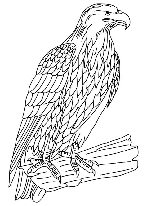 wildlife coloring pages wildlife safari coloring pages gianfreda 949924