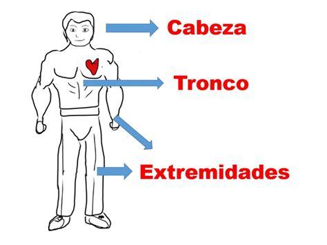 imagenes educativas del cuerpo humano partes del cuerpo humano youtube
