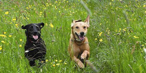 upaws dogs adopt a peninsula animal welfare shelter