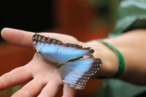 Butterfly Touch L by What Is Pura Vida Like Lmt Success