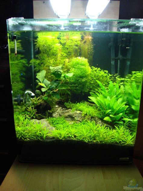 aquarium 60 l 632 aquarium christoph luz nano cube 60 liter