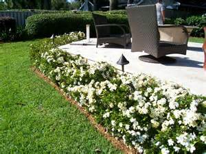 Flower Bed Front Yard - august beauty gardenias along the border by the driveway old home improvements pinterest