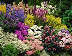Flower Plants For Garden Getting The Best Out Of Your Perennials Suttons Gardening Grow How