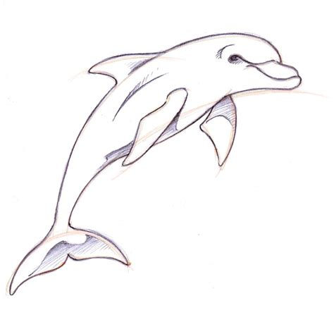 simple dolphin tattoo design dolphin drawings in pencil how to draw a dolphin