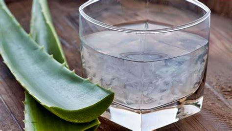 Aloe Vera Detox For Sick Eclectus by Health Benefits Of Aloe Vera Shout Of Victory Ministries